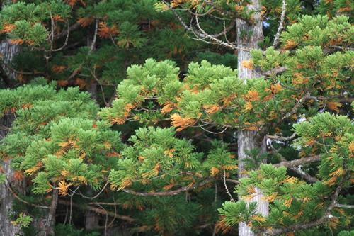観音沼森林公園 2014 9 26 017