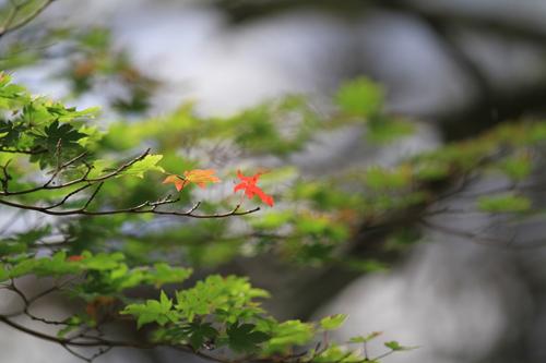 観音沼森林公園 2014 9 26 014