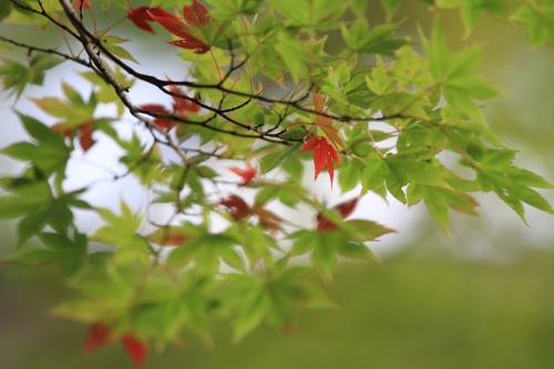 観音沼森林公園 2014 9 26 010