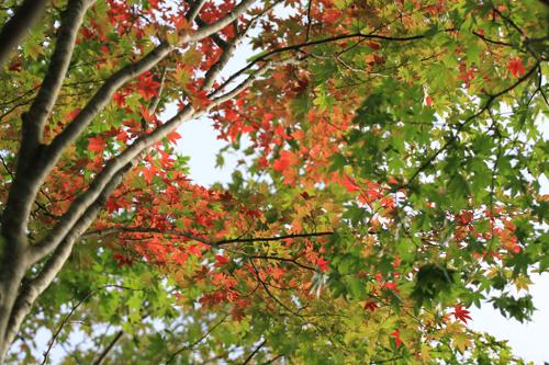 観音沼森林公園 2014 9 26 011