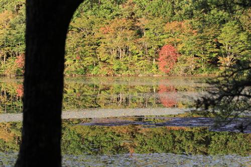 観音沼森林公園 2014 9 26 007