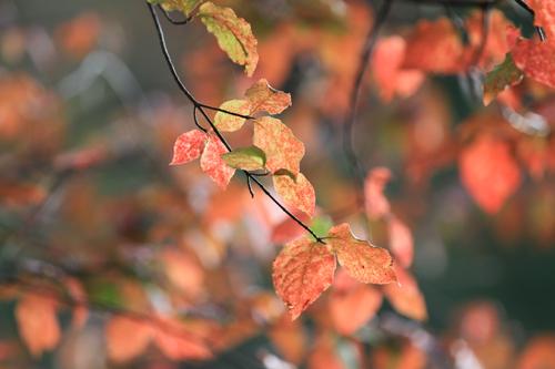 観音沼森林公園 2014 9 26 009