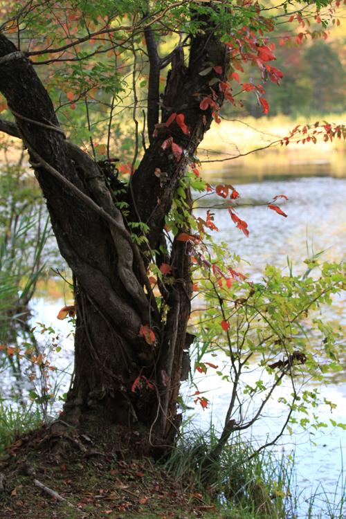 観音沼森林公園 2014 9 26 006