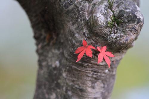 観音沼森林公園 2014 9 26 004