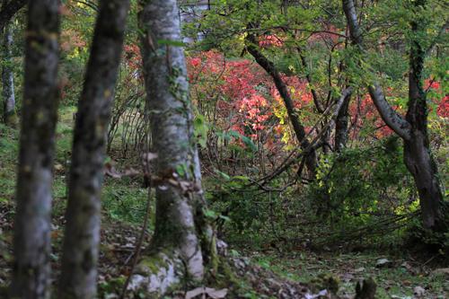 観音沼森林公園 2014 9 26 002