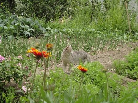 畑の中の野良猫