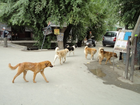 犬の集会?