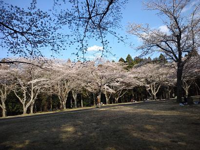 桜2012.4.8 009