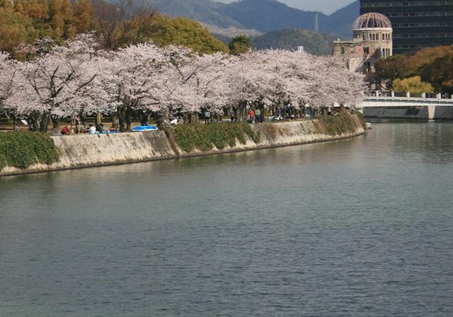 IMG_9974 平和公園の桜 W