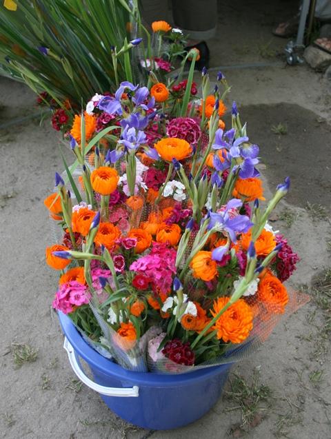 IMG_0583 お花 W