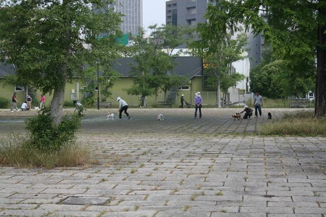IMG_0622 広大跡地 犬のお散歩 W