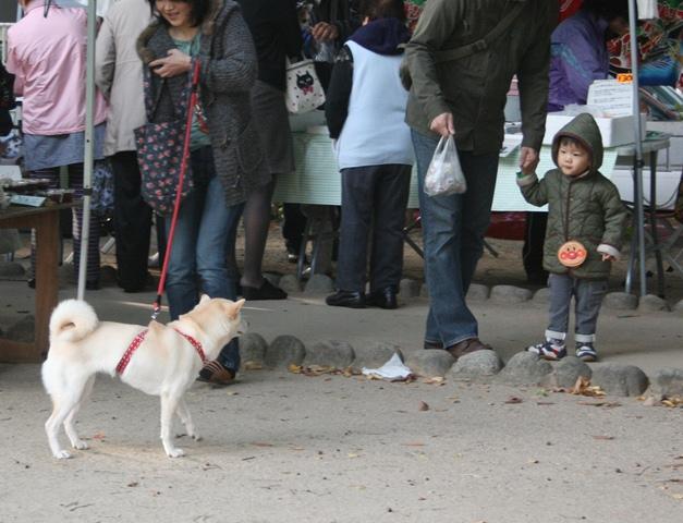 IMG_2925 朝市の犬 W