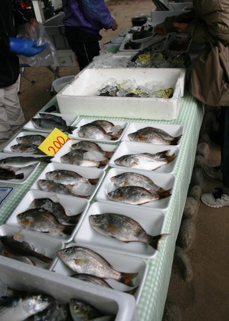 IMG_2918 朝市の魚 W