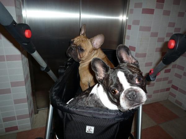 狂犬病予防接種2