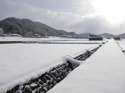 雪で覆われた田畑
