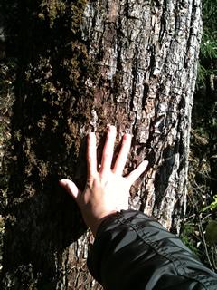 やまなしの木の幹2