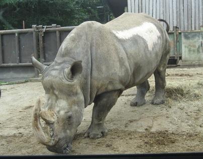 safari-3.jpg