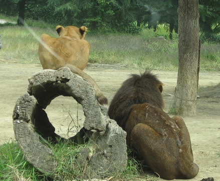 safari-8.jpg