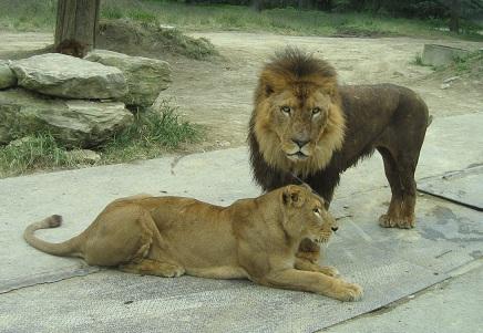 safari-9.jpg
