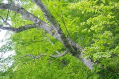 2049樹齢1000年