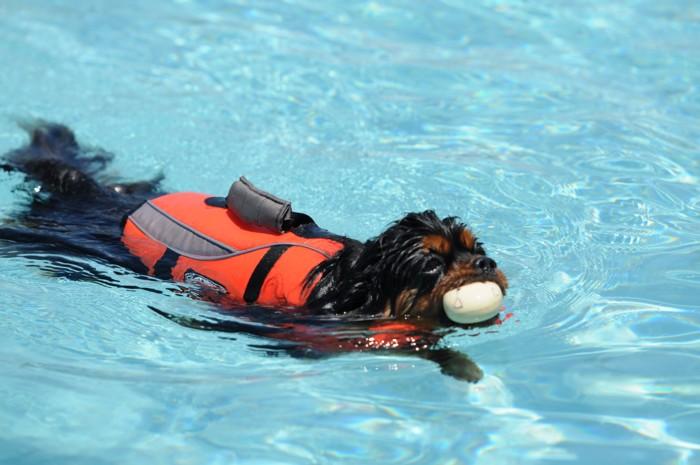 9455ちゃんと泳いでる~