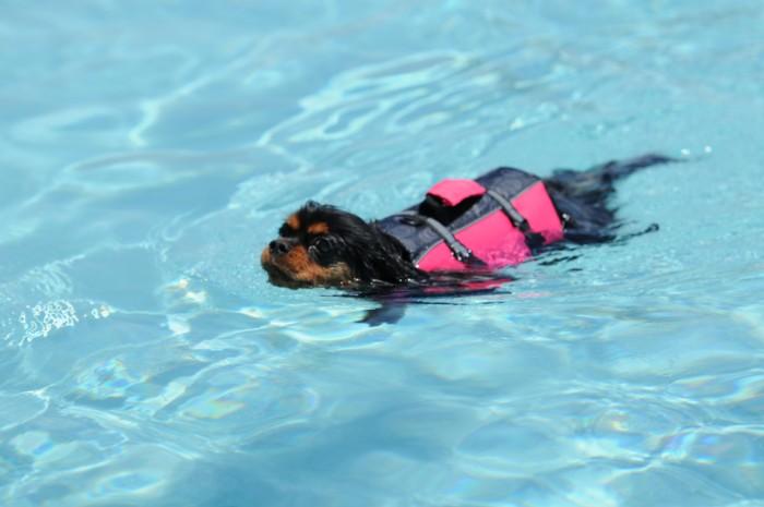 9514あたちも泳げます。