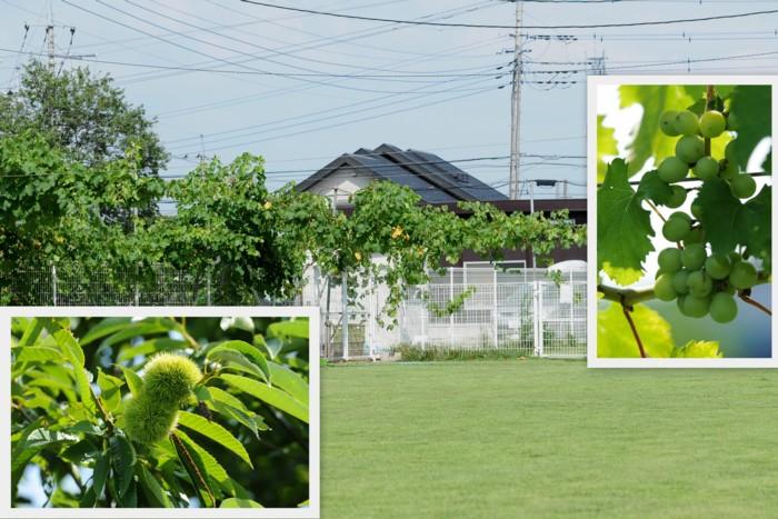 緑の芝が眩しいよ!