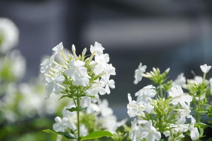 2511可愛い花です