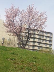 桜が咲いてる土手