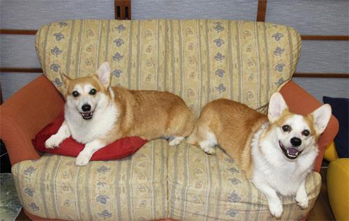 ソファーでニコニコ
