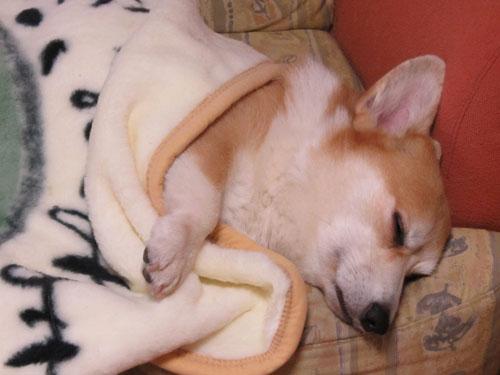 ハニーの寝顔