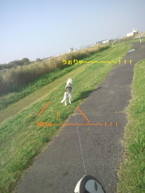 DCF00000033_convert_20120424234524.jpg