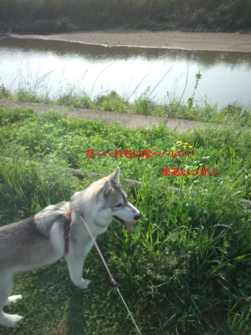 DCF00000036_convert_20120425121550.jpg