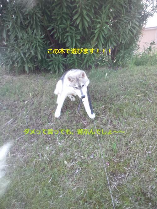 DCF00000041_convert_20120425123254.jpg