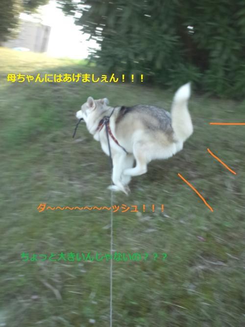 DCF00000042_convert_20120426115402.jpg