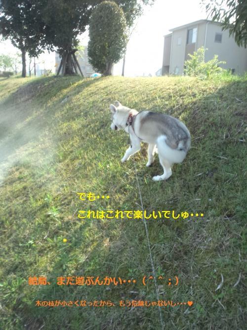 DCF00000046_convert_20120426121446.jpg