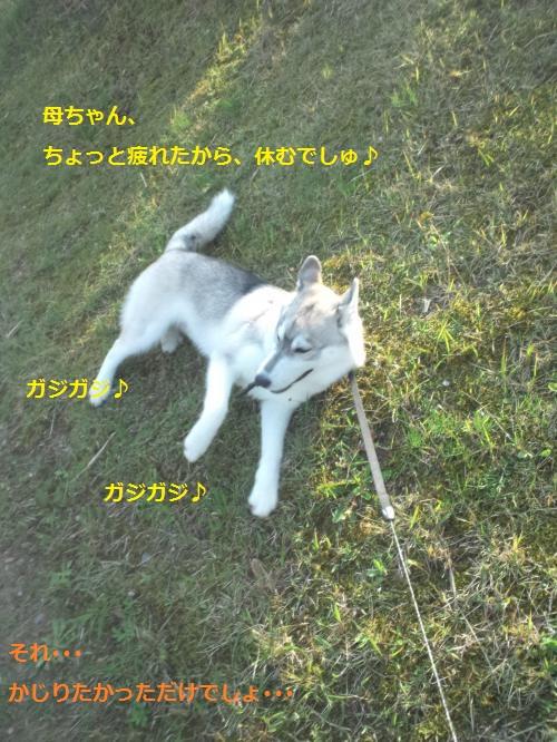 DCF00000051_convert_20120426124648.jpg