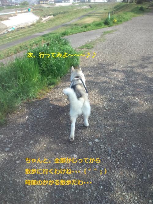 DCF00000053_convert_20120426125250.jpg