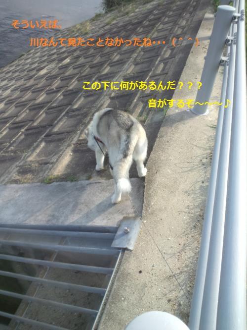 DCF000001_convert_20120419210952.jpg