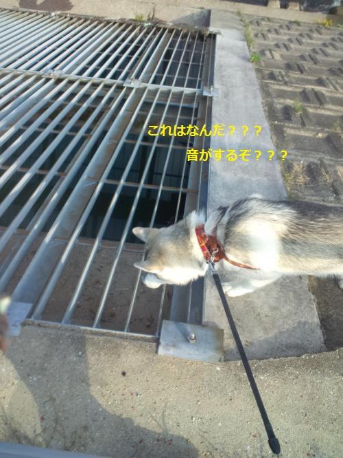 DCF000002_convert_20120419211610.jpg
