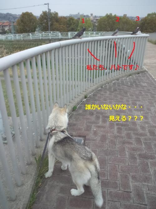 DCF0000031_convert_20120420141537.jpg