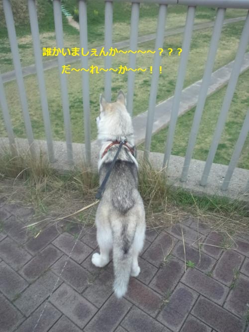 DCF0000032_convert_20120420141948.jpg