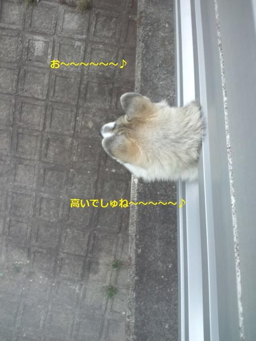 DCF0000036_convert_20120420144114.jpg