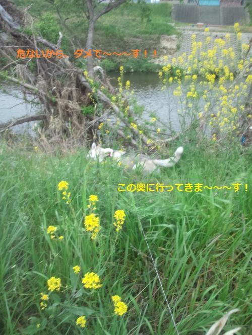 DCF0000040_convert_20120420144554.jpg