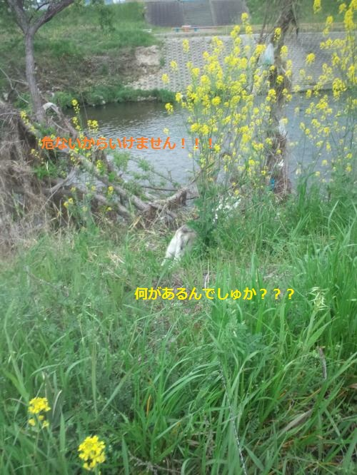 DCF0000041_convert_20120420144819.jpg