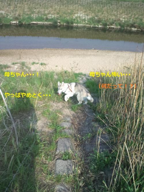 DCF000016_convert_20120419221138.jpg