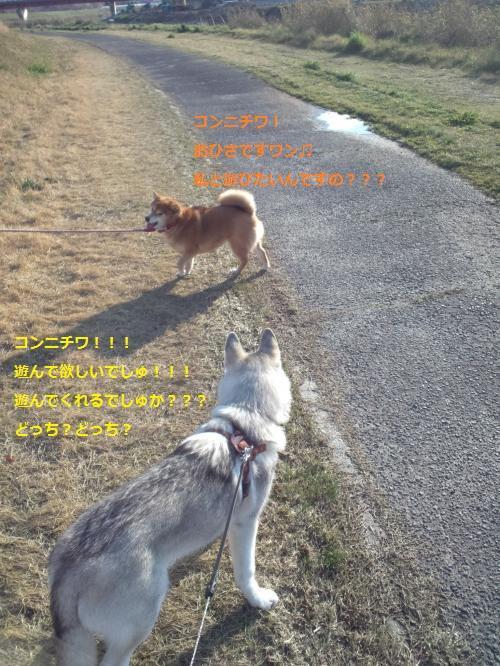 DCF00004_convert_20120407185636_convert_20120407190037.jpg