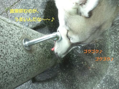DCF101_convert_20120518151302.jpg