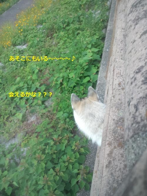 DCF166_convert_20120531212229.jpg