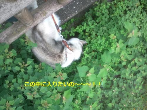 DCF197_convert_20120724193420.jpg